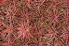 звезда листьев Стоковое Изображение