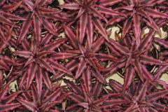 звезда листьев Стоковая Фотография