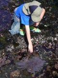 звезда моря мальчика Стоковые Изображения