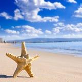 звезда моря пляжа Стоковые Изображения RF