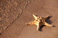 звезда моря Стоковые Изображения RF