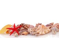 Звезда моря Стоковая Фотография RF