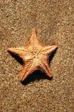звезда моря Стоковое Изображение