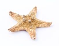 звезда моря Стоковые Изображения