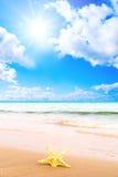 звезда моря castaway как раз Стоковое Изображение RF