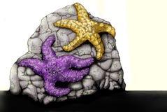 звезда моря ochre иллюстрации Тихая океан Стоковое Фото