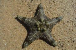 Звезда на песке стоковое фото rf