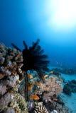 звезда океана пера Стоковые Фотографии RF