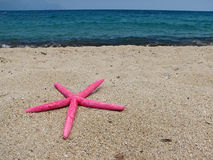 звезда раковины Стоковое фото RF