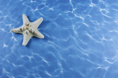 звезда рыб Стоковые Фото