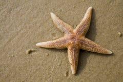 звезда рыб Стоковая Фотография RF