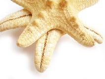 звезда рыб Стоковое Фото
