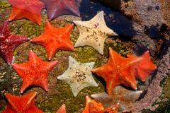 звезда силы Стоковые Фото