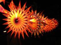 звезда фонариков стоковое изображение