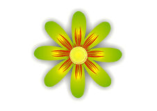 звезда цветка зеленая Стоковое Изображение