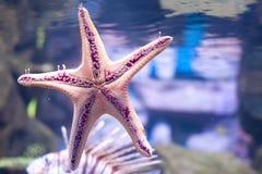 звезда Стоковые Изображения RF