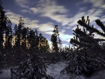 Звезда Sirius на ночном небе и снег в лесе зимы стоковое изображение rf