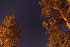 Звезды и деревья стоковое изображение rf