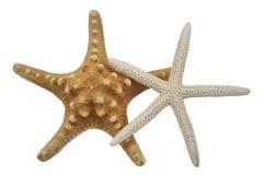 звезды моря Стоковое Изображение RF
