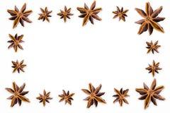 Звезда анисовки иллюстрация штока