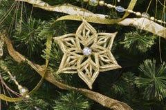Звезда и сосна рождества Стоковые Изображения