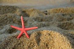 Звезда Красного Моря в заходе солнца Стоковая Фотография RF