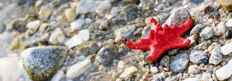 Звезда Красного Моря, каменный пляж, предпосылка чистой воды Стоковое фото RF