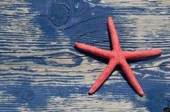 Звезда Красного Моря на стенде пляжа Стоковое фото RF