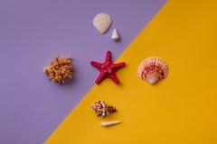 Звезда Красного Моря с другими морскими вещами Стоковое Изображение RF