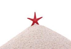 Звезда Красного Моря Стоковая Фотография RF
