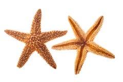 Звезда моря Стоковое фото RF