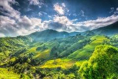 Звезда Солнця над красивой гористой местностью Sapa Стоковое Фото