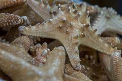 Звезда Fishoes Стоковое Изображение
