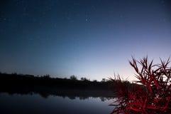 Звезда Gazing Стоковые Изображения RF