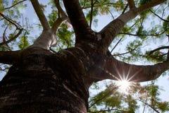Звезд-солнечный свет и дерево стоковое изображение