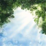 звезды абстрактной картины конструкции украшения рождества предпосылки темной красные белые Зеленая хворостина дерева Xmas на неб Стоковые Изображения RF