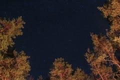 Звезды в лесе Стоковое фото RF