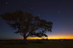 Звезды на ноче стоковые фото