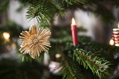 Звезды соломы на рождественской елке Стоковое фото RF