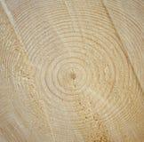 звенит древесина Стоковое Изображение RF