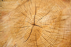 звенит древесина стоковое фото