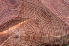звенит древесина Стоковая Фотография