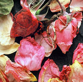 звенит розы Стоковые Фотографии RF