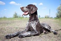 звероловство собаки Стоковая Фотография