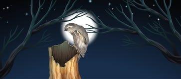 Звероловство сыча на ноче иллюстрация штока