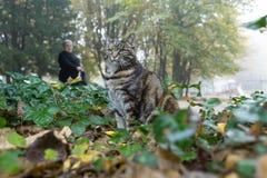 Звероловство кота в парке города Стоковые Фото