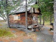 Звероловство дома в древесинах в лесе Стоковые Фотографии RF