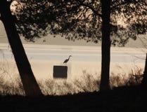 Звероловство птицы крана на озере Стоковое Изображение RF
