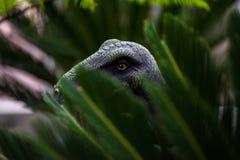 Звероловство T-rex Стоковое Изображение RF