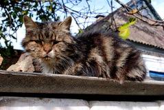 Зверский бездомный кот стоковое изображение rf